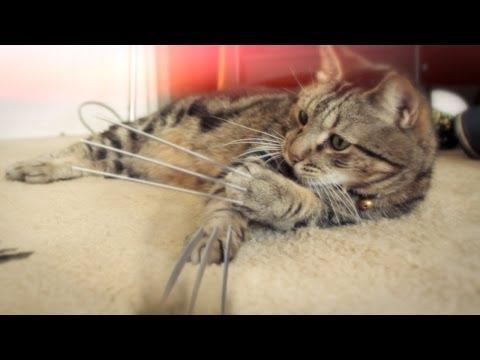 katten hale analplugg kamera skjult